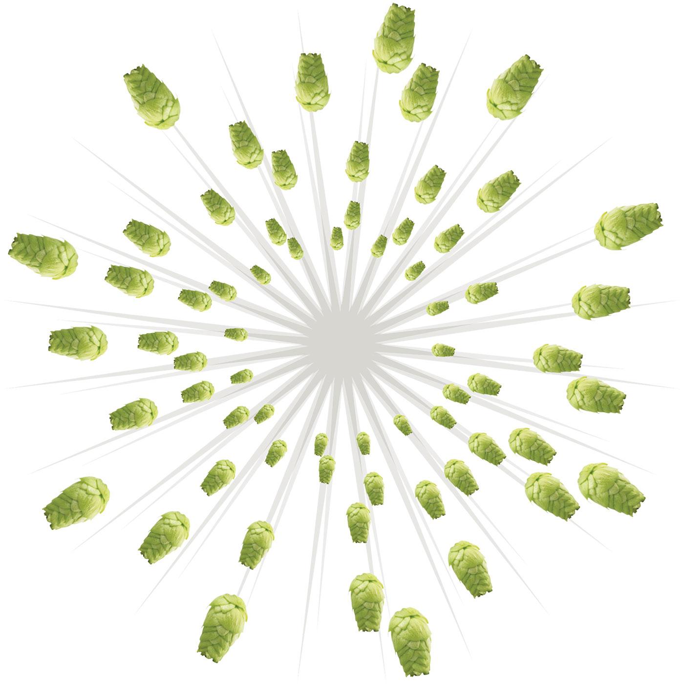 hops-bursting
